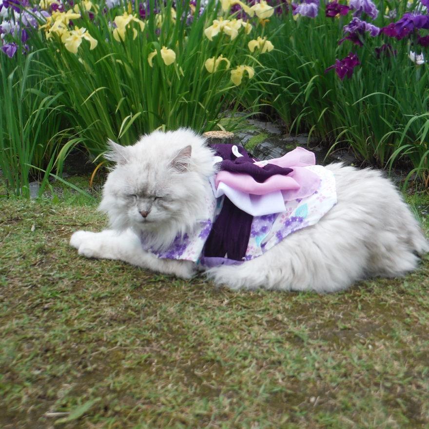 イメージ:菖蒲の花を見てきました~^^