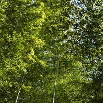 イメージ:森林の施設マップ・図面