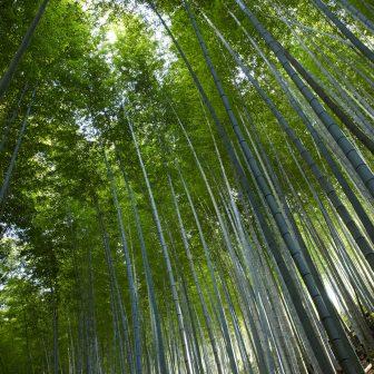 イメージ:竹林の施設マップ・図面